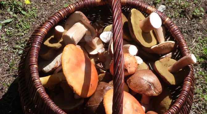 Tempi di funghi