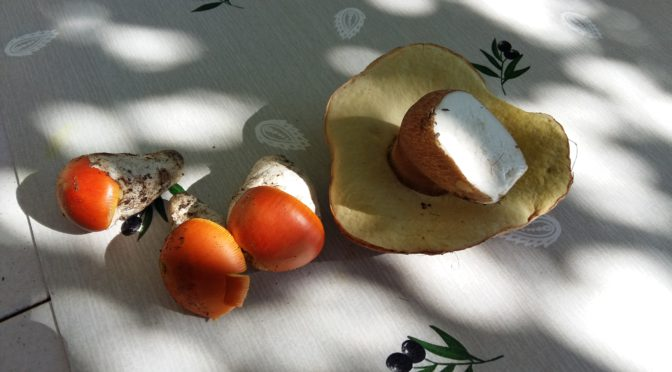 Les premiers champignons