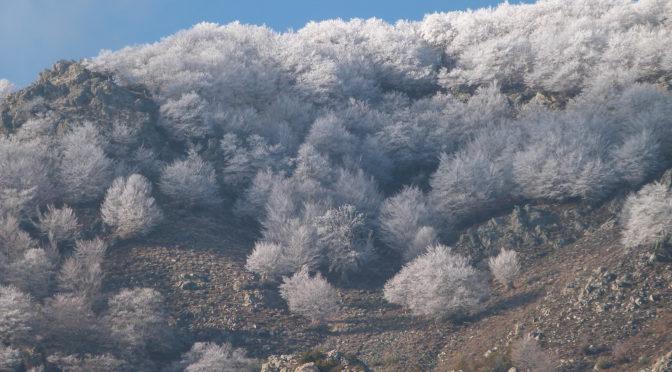 Les hêtres du San Petrone sous le givre