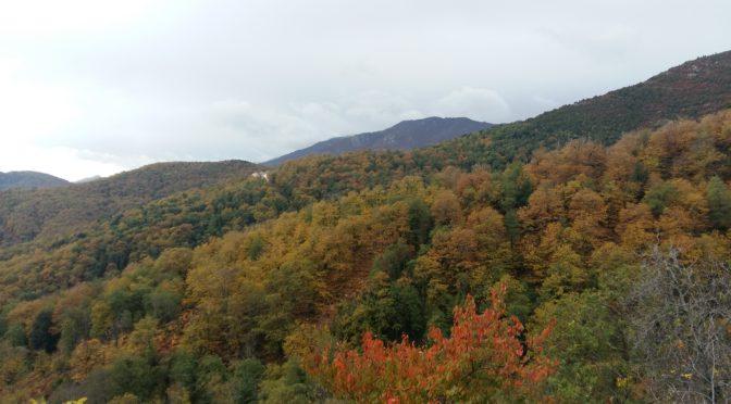 Enfin l'automne