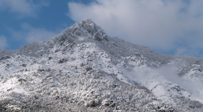 Belle chute de neige