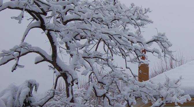 Dernières images de la neige